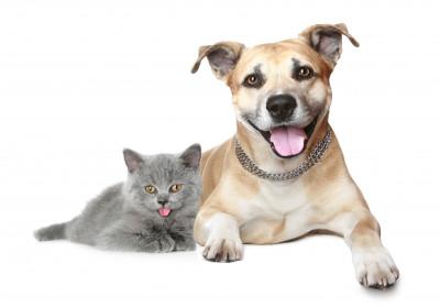 Pre psov a mačky